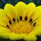 花びら一つ一つにワンポイント