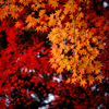 秋の色 D72_4569