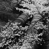 琵琶湖疏水のパイプ