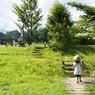 緑の中を歩く
