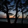 湖畔 夕焼けと松