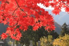 北信濃RED~楓~04