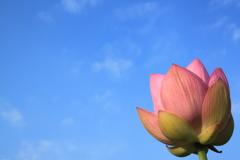青空の下咲き誇る