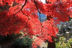 北信濃RED~楓~03
