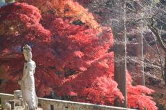 北信濃RED~楓~01観音様も楓に感激