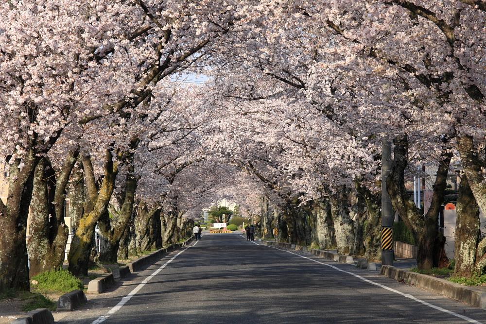 桜のある風景2