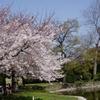 住吉公園の池と桜