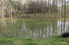 水面の木立