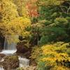 錦秋の渓流