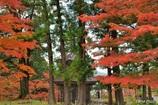 杉と楓と多宝塔
