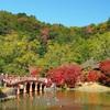 極楽浄土の秋