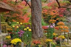 洗心亭の秋景色