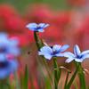 Garden photo 4