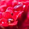 愛の水中花粉