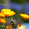 Garden photo 5