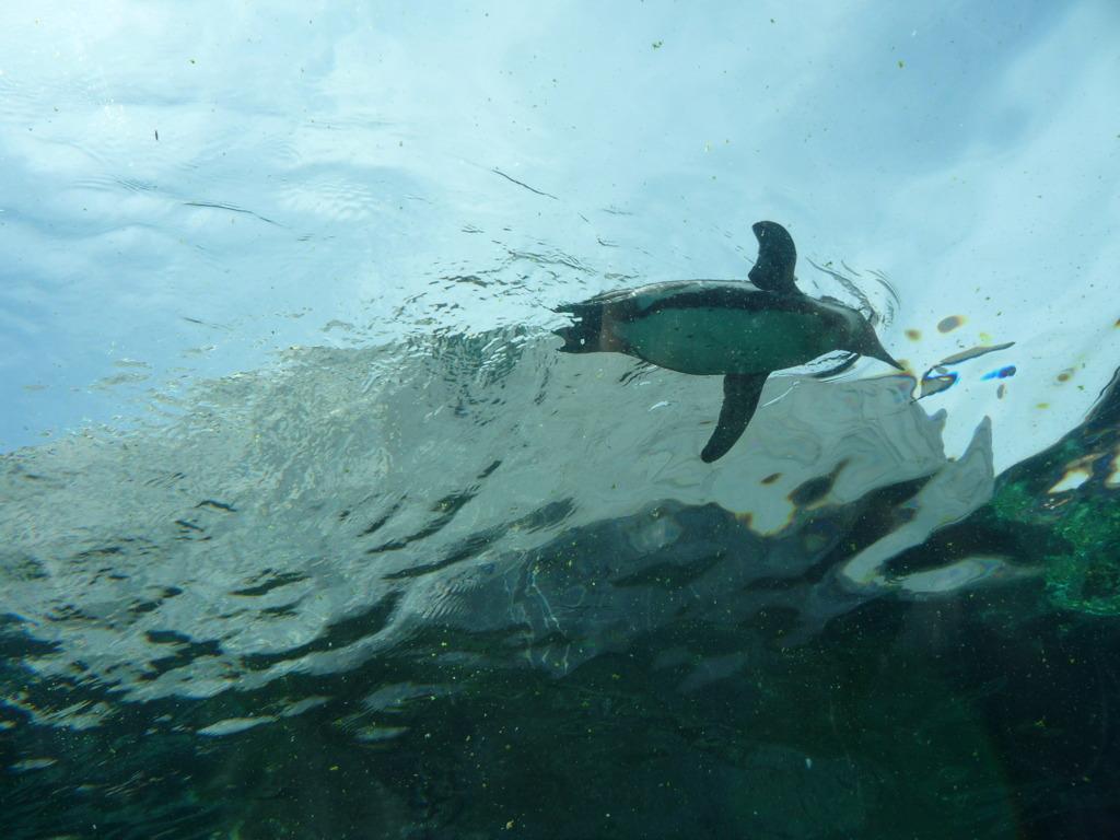 ペンギン飛ぶ