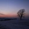 黄昏時の哲学の木