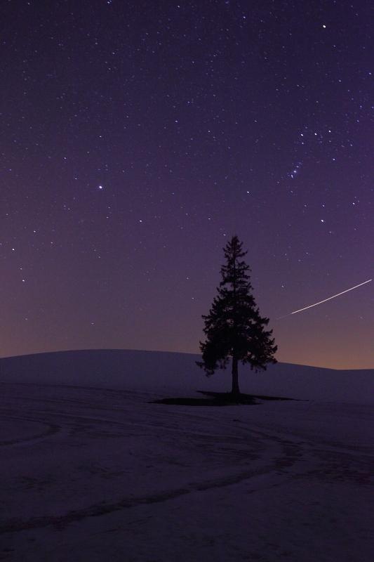 星とクリスマスツリーの木