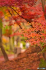 秋の色彩8