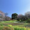 枝垂れ桜のある風景..