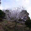 桜_音無山_6