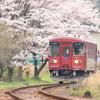 桜の咲く頃