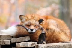 もふもふ枕
