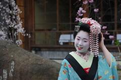 祇園白川芸舞妓散歩