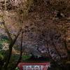 三井寺(圓城寺)の夜桜