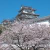 20100404姫路城桜②
