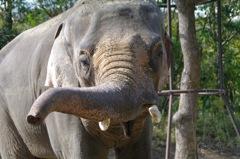 zoo(象)