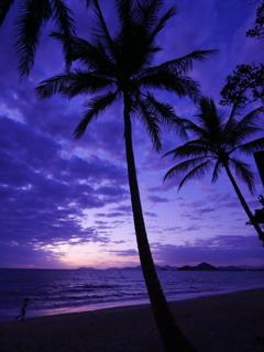Palm Cove Beach 朝焼け(1)
