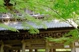 新緑の楼閣