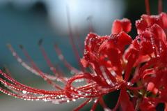 雨上がりの赤・・・