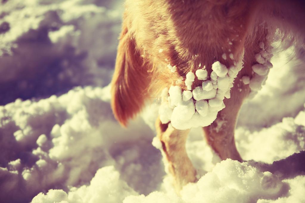 これも雪玉