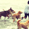 少年と犬達