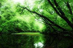 freshgreen