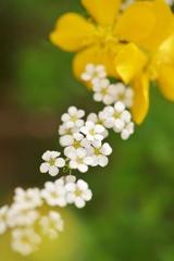 花のストラップ