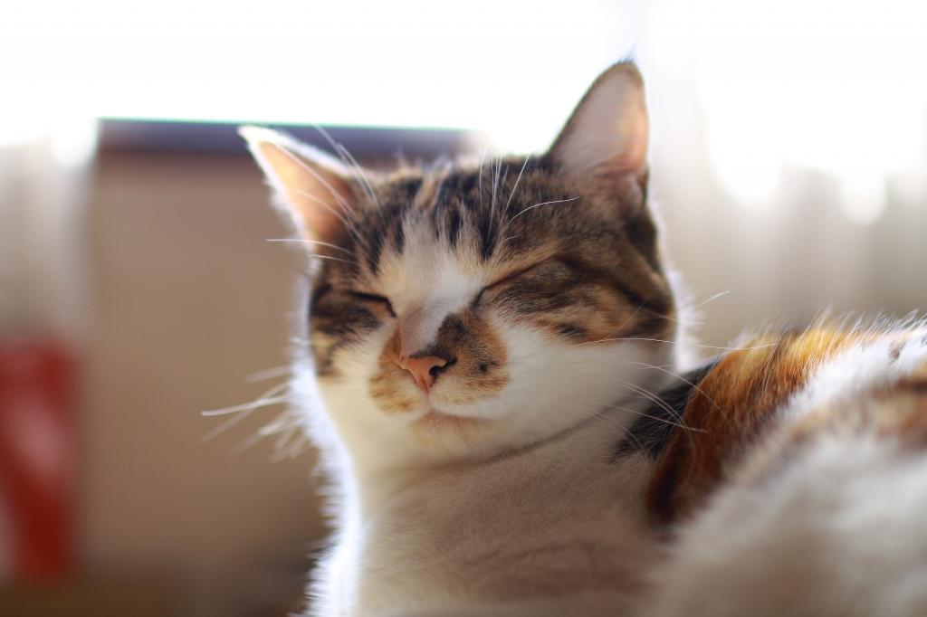 ネコになりたい