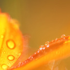 SONY DSLR-A700で撮影した植物(陽射)の写真(画像)