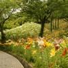 ゆり咲く小路2