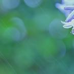 SONY SLT-A77Vで撮影した植物(雨と光の共演(harmony))の写真(画像)