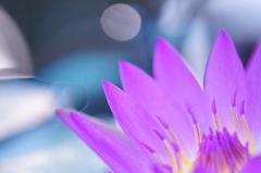 space flower