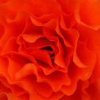 SONY DSLR-A700で撮影した植物(深紅)の写真(画像)