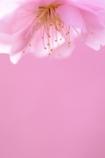 春色lamp(2013version)
