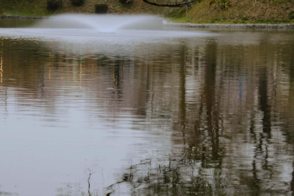 湖面に映る春