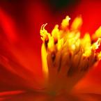SONY DSLR-A700で撮影した植物(輝ける時)の写真(画像)