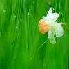 春雨に濡れて