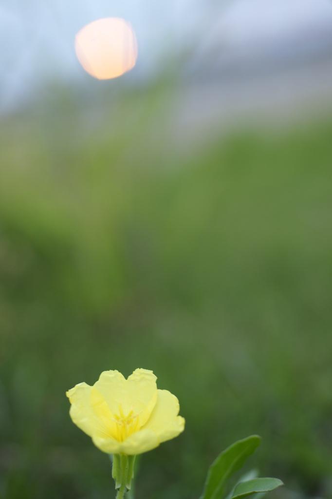 夕日と黄色い花