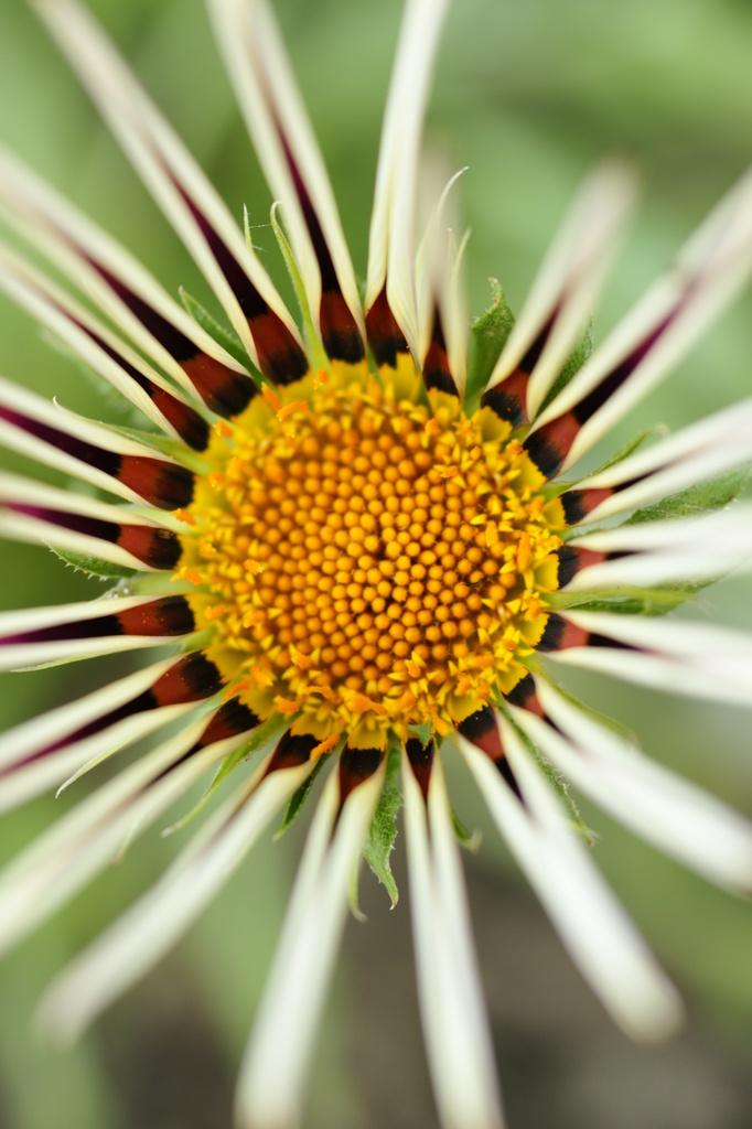 花の真ん中